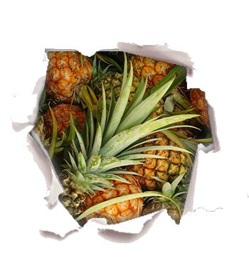 amarena img buco-BIA.png